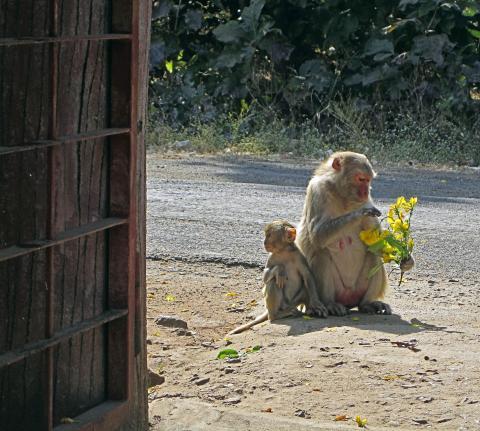 훈련 받은 원숭이들은 간단한 덧셈을 할 수 있다. ⓒ morgueFile free photo