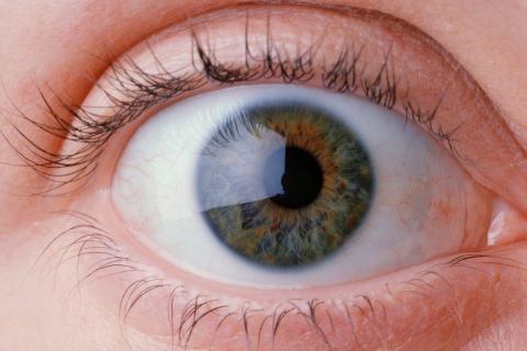 사람의 눈동자는 상황에 따라 커지기도 하고 작아지기도 한다. 공포상황을 마주하면 커지고, 혐오스러운 상황을 마주하면 작아진다. 왜 이러한 현상이 일어나게 되는 것일까에 대한 해답이 밝혀졌다. 눈동자의 움직임이 정서적 반응에 기초한다는 것이다.  ⓒ ScienceTimes
