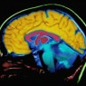 뇌파 활용 범위 '무궁무진'