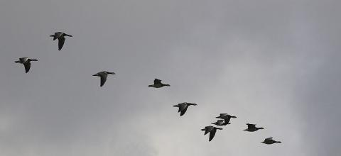 생존을 위해 필요한 것은 경쟁이기도 하지만, 배려가 필요하기도 하다. 철새들의 V자 편대비행은 바로 생존을 위한 '배려'를 잘 보여주는 예시라고 할 수 있다.