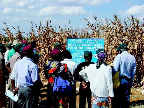 GM 작물의 안전성 연구를 놓고 찬반 논쟁이 가열되고 있는 가운데 안전성을 연구하는 과학자들이 큰 어려움을 겪고 있다. 사진은 몬산토에서 개발한 GM 옥수수 '메이즈(Maize)' 농장을 견학하고 있는 케냐 농부들.  ⓒWikipedia