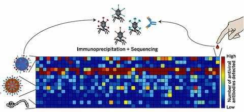 "Virscan을 이용한 바이러스 항원결정기 스캐닝. 열 도표(heatmap)에 나타난 각 세포의 색깔을 보면 각 혈액샘플(가로줄)에서 검색한 바이러스(세로)에 대한 항원결정기가 얼마나 많은가를 알 수 있다. Credit: Figure from the print summary of Xu et al., ""Comprehensive serological profiling of human populations using a synthetic human virome"" SCIENCE, 348:1105 (5 June 2015). ⓒ ScienceTimes"