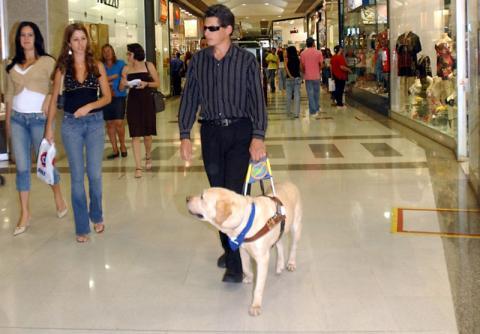 실명이 된 사람도 자기장을 활용하여 스스로 길을 찾을 수 있을 것으로 보인다. 뇌가 새로운 자극을 인식할 수 있기 때문이다. ⓒ Antonio Cruz/Abr ( Agência Brasil) via Wikipedia