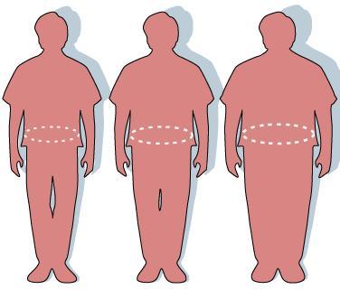 렙틴이 일정 수준을 유지하게 되면 대사 효율이 높아져 그림의 왼쪽처럼 체중이 줄어든다. 하지만 렙틴이 과도하게 분비되거나 부족해서 저항성이 생기면 식욕 상승으로 인해 그림의 오른쪽처럼 살이 찌게 된다.  ⓒ FDA/Renée Gordon (Wikipedia)