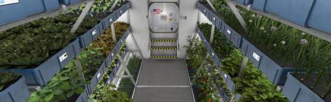 국제우주정거장에서 베지(Veggie)라는 이름의 미니 농장에서 레드 로메인 상추를 재배하고 있는 모습 ⓒ NASA