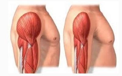 청년과 노년의 근육량 비교 ⓒ iofbonehealth.org