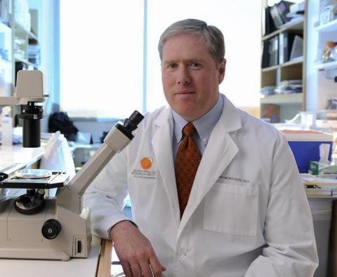 골수의 조혈모세포 위치와 양태를 파악하는 연구를 이끈 '신 모리슨'(Sean J. Morrison) 미국 텍서스 사우스웨스턴대 어린이연구소 이사