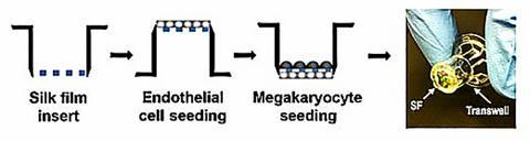 연구팀이 고안한 기능성 혈소판 생성과정 ⓒ ScienceTimes