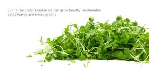 수경재배 기술 혁신이 이어지면서 곡물류 등 생산 범위가 크게 넓어지고, 수익성 역시 크게 개선되고 있다. 사진은 런언 방공호에서 수경재배한 무공해 채소류.  ⓒzerocarbonfood.co.uk/