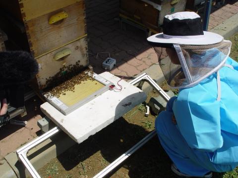 봉독 채집을 진행하고 있는 한상미 농업연구관 ⓒ 한상미