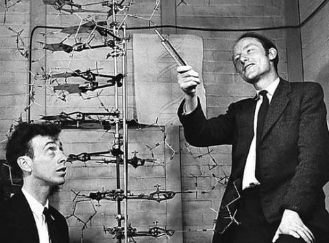 DNA의_이중나선_구조를 발견한 왓슨과 크릭. ⓒ Free photo