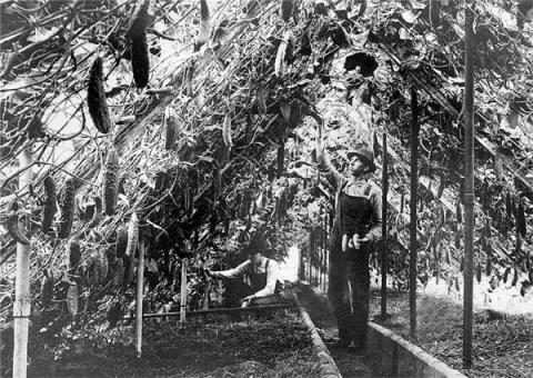 하이델베르크 온실을 비롯한 초창기 서양의 온실은 땅이 차갑고 대기는 건조해서 식물이 자라기 힘들었다.  ⓒ the Richfield Historical Society / Wikipedia