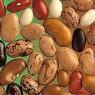 매일 유전자변형 콩 먹는 한국인
