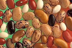 2014년 우리나라에서 식용으로 수입한 콩의 80%가 유전자변형 콩이었다.  ⓒ ScienceTimes