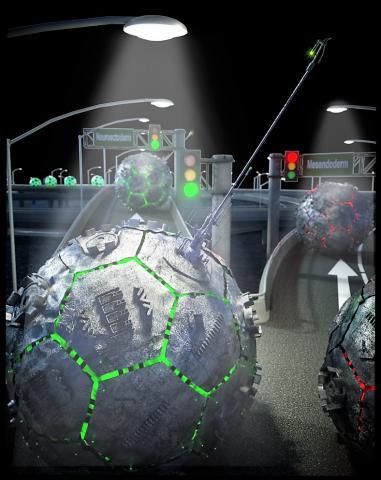 그림에서 안테나처럼 생긴 초기 섬모가 줄기세포 고속도로를 따라 나타나는 방향신호를 읽고 인간 배아줄기세포가 신경세포 전구체가 될지를 결정하게 된다.  illustration by Peter Allen ⓒ UCSB