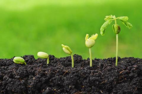 미국 학술원(NAS)에서 지난 17일 GMO의 무해성을 주장하는 내용을 담은  종합보고서를 발표해 소비자단체 등과 논쟁을 불러일으키고 있다.   ⓒec.europa.eu