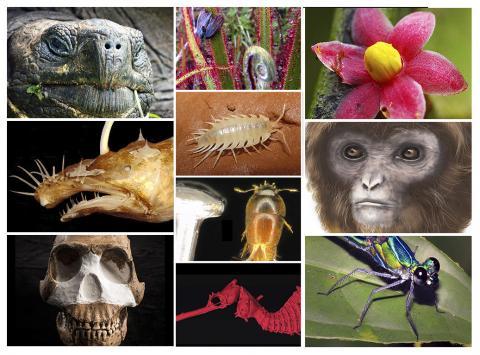 새로 발견한 생물 '톱10 리스트'