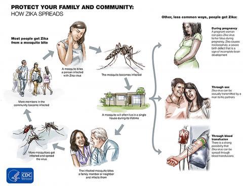 미국 질병관리본부(CDC)의 지카바이러스 감염예방 포스터. 출처 : CDC ⓒ ScienceTimes