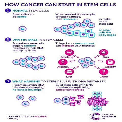 암은 왜 줄기세포에서 시작되는가를 설명한 그림. ⓒ Cancer Research UK