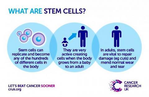 줄기세포란 무엇인가를 설명한 그림.  ⓒ Cancer Research UK