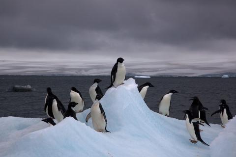 븍극에 이어 남극 대륙에서도 빙하가 녹고 있다는 징후가 나타나 과학자들이 긴장하고 있다. 남극 동부지역 빙하 위에서 약 8000개의 호수가 밣생한 것으로 확인되고 있다.   ⓒWikipedia