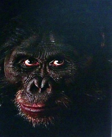 인류에 가까워질 수록 인류와 닮아간다. 눈 흰자위가 있는 오스트랄로피테쿠스. ⓒ 위키피디아