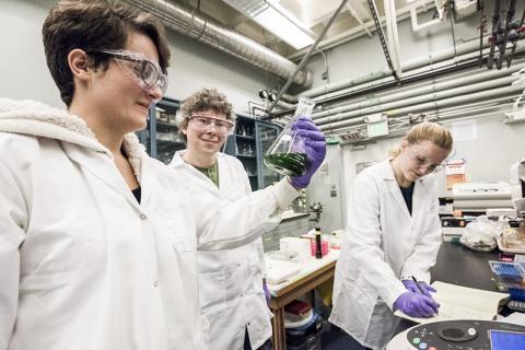 박사후 과정 연구원인 루이스 라살(왼쪽부터)과 연구자인 잰 컨 박사, 연구보조원인 레이시 다우딧이 버클리랩의 생물반응기에서 광화학계 Ⅱ 단백질을 분리하기 위해 청록색 세균을 배양하고 있다.  Credit: Marilyn Chung/Berkeley Lab