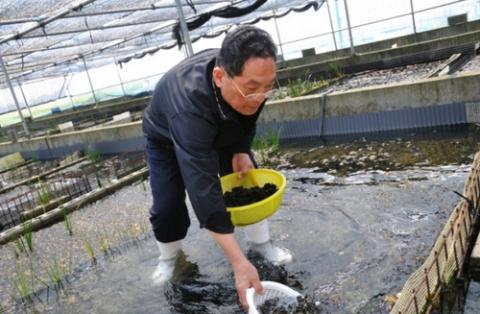 일본의 민물김 양식장 전경 ⓒ 강원발전연구원