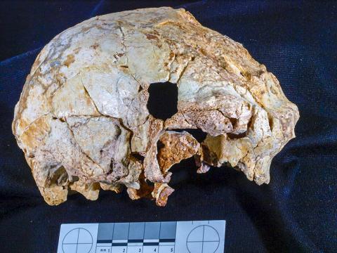 포르투갈 아로에이라에서 발굴된 40만년 전 초기 인류 두개골(아로에이라 3) Credit: Javier Trueba.