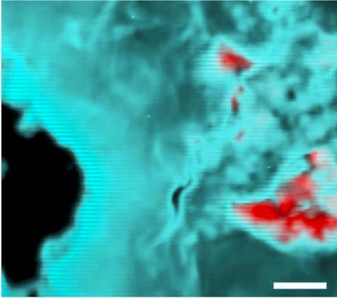 충격을 받은 휘틀로카이트 샘플의 X선 형광 지도. 빨간색은 휘틀로카이트와 메릴라이트 농도를 보여준다. Credit: Argonne National Laboratory