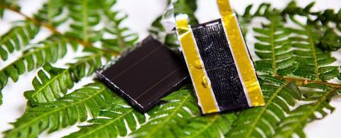고사리에서 영감을 받아 만든 태양 에너지 저장장치 시제품. ⓒ RMIT
