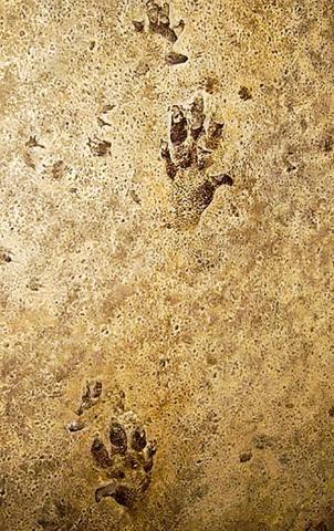 트라이아스기 때 고대 공룡(Chirotherium)의 발자국 생흔 화석. 옥스퍼드대 자연사박물관 소장. Credit: Wikimedia / Ballista