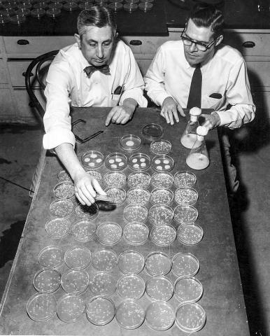 식물학자 존 스타우퍼와 세균 배양을 연구하는 마이런 배커스 교수. 두 사람은 곰팡이를 자외선에 노출시켜 돌연변이체를 개발함으로써 전시 중 생산성 높은 페니실린 균주를 분리해 냈다.   Credit: UW-Madison Archives
