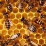 꿀벌 떼죽음은 살충제 독성 때문