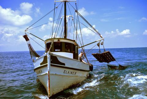 불법조업으로 세계 해양 자원이 고갈될 위기에 처해 있는 가운데 불법 조업을 하고 있는 어선들을 정밀 추적해 감시할 수 있는 기술이 개발돼 큰 주목을 받고 있다. 사진은 새우를 잡고 있는 트롤어선. 기사 내용과는 관계없음. ⓒWikipedia
