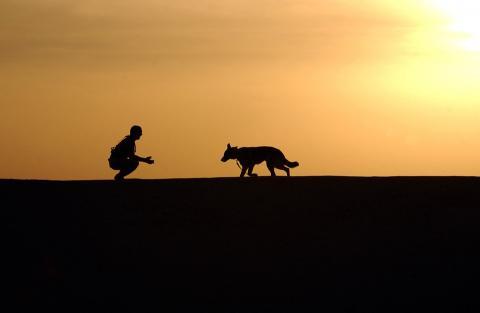 개가 인간에게 친한 유전적 이유가 드러났다. ⓒ Pixabay