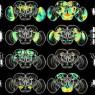 인공지능으로 초파리 뇌-행동 지도 완성
