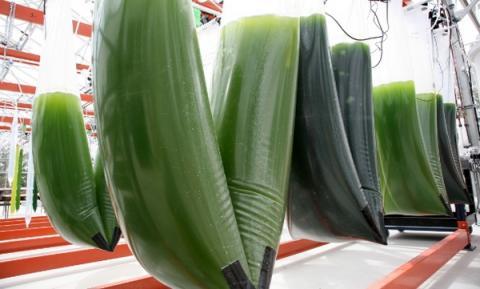 엑손모빌 연구진이 미세조류를 버이오에너지로 만드는 실험을 진행하고 있다 ⓒ algaeworld.org