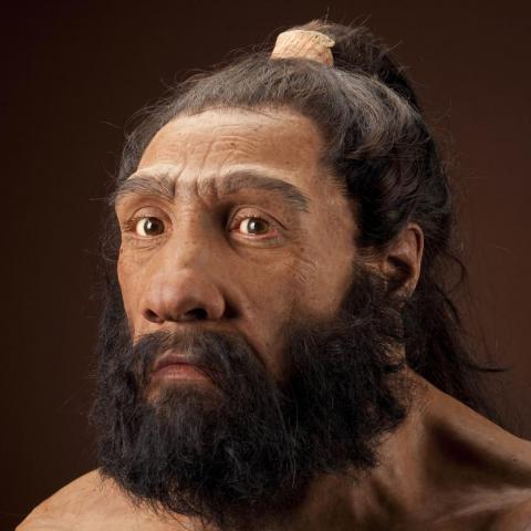 미코콘드리아 유전체 분석을 통해 인류 조상의 모습이 밝혀지고 있다. 사진은 인류 조상의 한 혈통으로 인정받고 있는 네안데르탈인 가상도.  ⓒhumanorigins.si.edu
