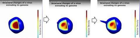 바이러스 내부 유전체가 재구성되면서 관 모양의 구조물을 내보내는 모습. 동영상 캡처. Credit: Ourmazd group, UW-Milwaukee Department of Physics