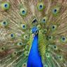과학자 27명, '색깔의 생물학' 선언