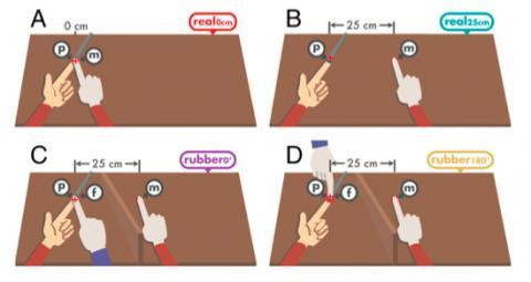 고무손 착각으로 감각 감쇠 현상이 몸 소유권에 따른 현상임을 보인 실험이다. 위 왼쪽은 오른손 검지로 왼손 검지를 누르는 경우로 감각 감쇠에 따라 같은 세기를 느끼려면 더 세게 눌려야 한다. 위 오른쪽은 두 손이 25cm 떨어져 있어 감각 감쇠가 나타나지 않는다. 아래 왼쪽은 왼손 검지를 고무손(파란색 소매) 검지가 누르는 경우로 진짜 오른손은 25cm 떨어진 곳에 있지만 가려져 있다 이 경우 고무손을 진짜 손으로 착각해 감각 감쇠가 나타난다. 아래 오른쪽은 진짜 손으로 착각할 수 없게 고무손이 반대편에 있는 경우로 감각 감쇠가 일어나지 않는다. ⓒ 미국립과학원회보