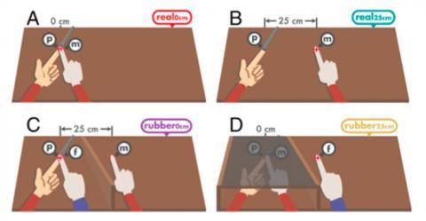 고무손 착각을 이용해 진짜 손가락으로 눌렀음에도 감각 감쇠가 억제됨을 보인 실험이다. A, B, C 세 경우는 앞의 실험과 같고 아래 오른쪽(D)은 오른손 검지로 왼손 검지를 누르는 경우이지만 가려져 보이지 않고 25cm 떨어져 있는 고무손은 보인다. 오른손 검지로 왼손 검지를 누름에도 보이지 않기 때문에 내 손으로 착각하는 고무손이 왼손과는 떨어져 있는 센서(f)를 누르는 것으로 판단해 감각 감쇠가 억제된다. ⓒ 미국립과학원회보