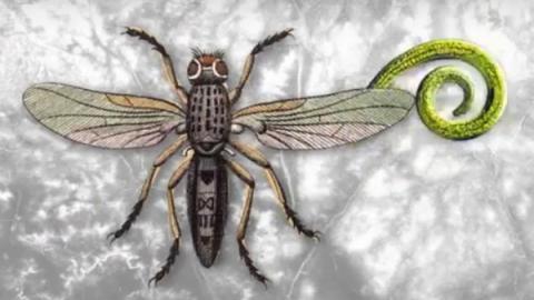 기생충의 생태는 해충의 생물학적 방제에 도움을 줄 것으로 보인다