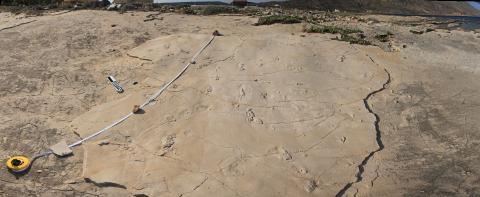 크레타 섬의 트라칠로스 발자국 화석 ⓒAndrzej Boczarowski