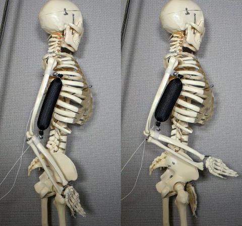이두근으로 사용한 인조근육이 팔을 90도로 들어올린 모습(오른쪽). Credit: Aslan Miriyev/Columbia Engineering