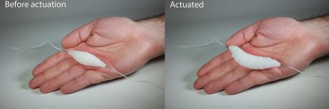 가는 저항성 전선에 연결된 전기구동 인조 근육 모습(왼쪽). 8V의 저전력을 입력해 팽창한 모습(오른쪽). Credit: Aslan Miriyev/Columbia Engineering