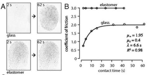 A는 유리(위)와 탄성중합체(아래)에 검지 끝을 갖다 댔을 때 실제 접촉면을 보여주는 이미지다. 2초가 지났을 때 둘 사이의 접촉면 차이가 크지만 62초가 지났을 때는 비슷하다. B는 접촉 시간에 따른 마찰계수의 변화를 보여주는 그래프로, 탄성중합체는 쭉 큰 값인 반면 유리는 작다가 증가해 20초 쯤 지나 정점에 이른다. 실리콘 같은 탄성중합체가 그립 소재로 널리 쓰이는 이유다.  ⓒ 미국립과학원회보