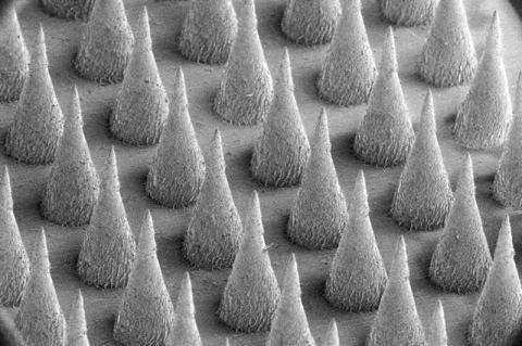 인공 베타세포의 또다른 형광 이미지를 확대한 사진. Credit : Gu Lab, UNC-NC State