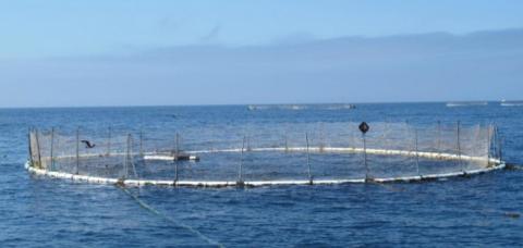 수심 40m 이상 해역에서 어류를 키우는 외해 양식이 주목을 끌고 있다